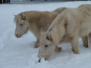 2 horses in the snow