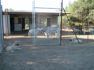Ring of Protection fence with animals eating and dogs keeping guard